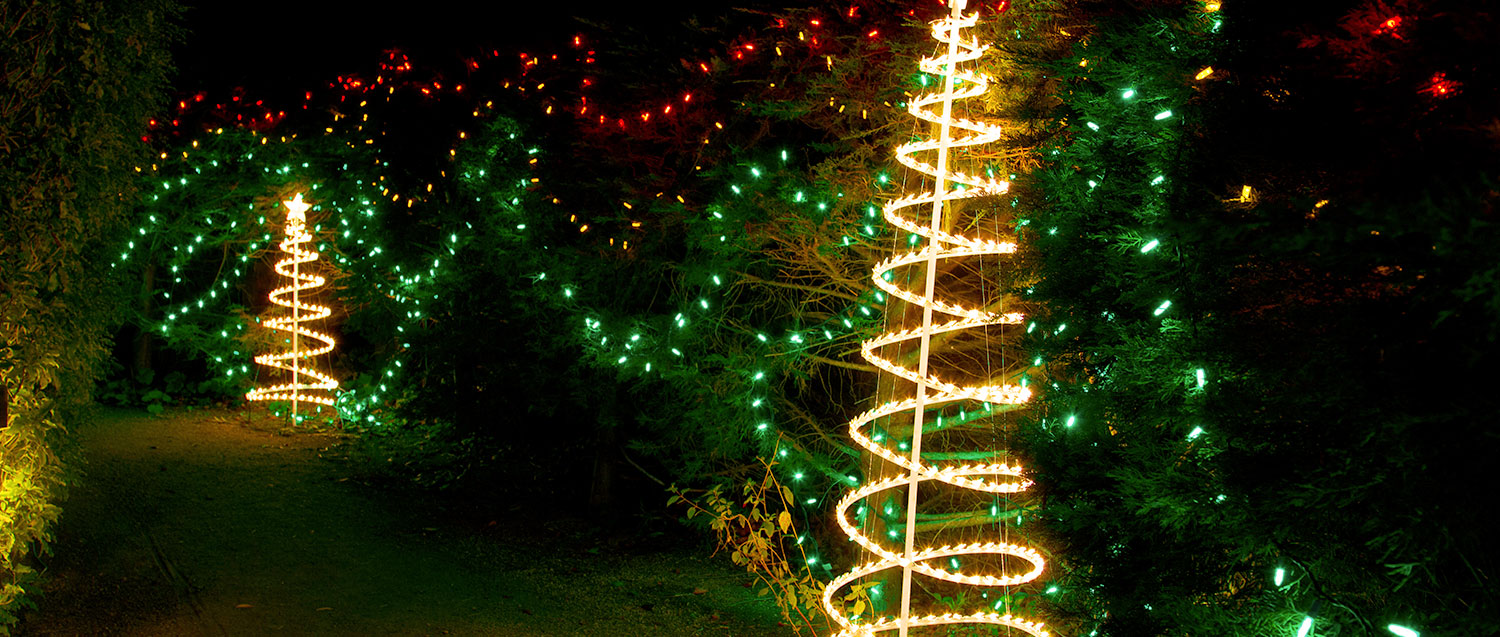 christmas light show trees