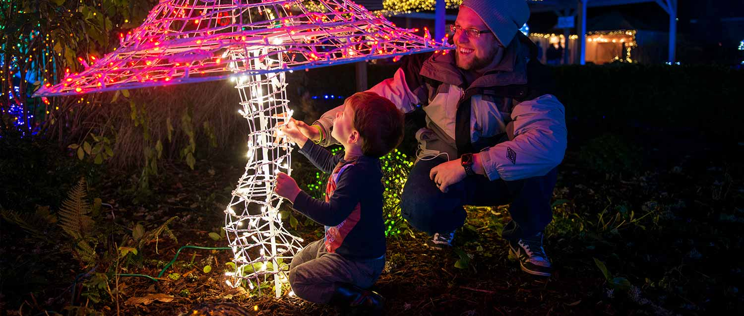 family light show